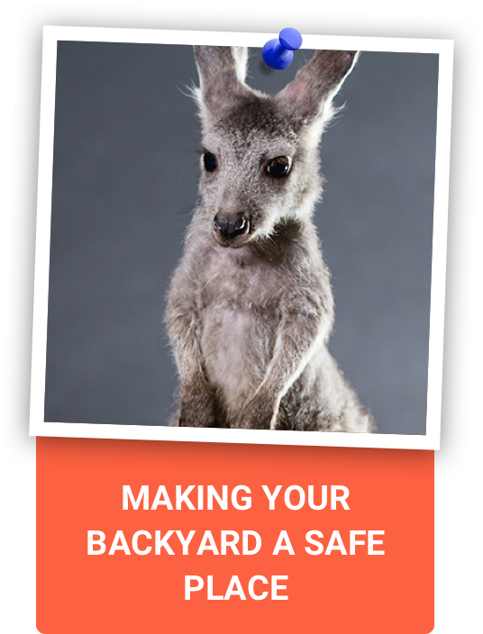 Making your backyard a safe place